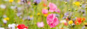 Songs of Summer : 22 Jun, Mawnan